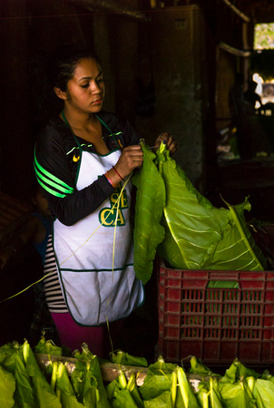 Woman selecting tobacco in Honduras