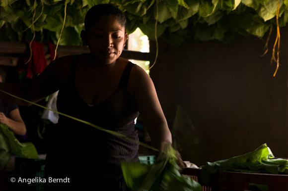 Female worker on a tobacco plantation in Honduras