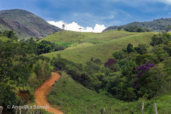 Iracambi Forest and Farm project in Minas Gerais